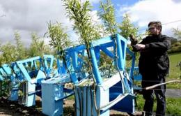Nhà thiết kế người Anh trồng cây làm đồ nội thất