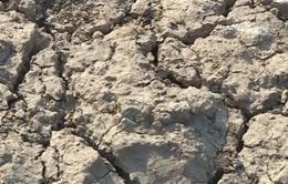 Gia Lai: Khó khăn tìm nguồn nước cứu cây khi hạn nặng