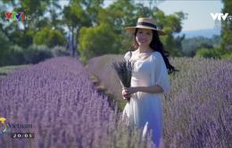 Có một mùa oải hương ở Melbourne