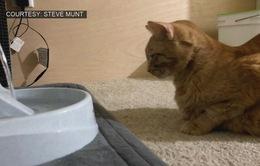 Mỹ: Gửi tro cốt mèo đã chết lên vũ trụ