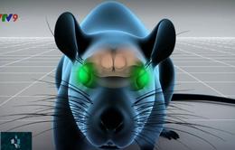 Công nghệ nano làm cho chuột nhìn thấy ánh sáng hồng ngoại