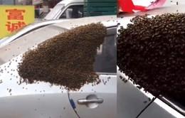 Chiếc xe ô tô bất ngờ bị hơn 10.000 con ong vây kín