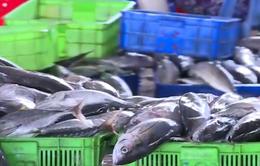 VASEP kiến nghị Bộ NN&PTNT ưu tiên xem xét giải quyết lô cá ngừ ách tắc