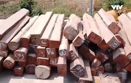 """Mục sở thị lô gỗ """"khủng"""" tại Cảng Bình Long"""