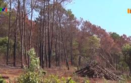 Gia tăng phá rừng phòng hộ lấy đất tại Gia Lai
