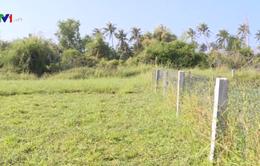Hợp thức hóa đất lúa để cấp giấy chứng nhận quyền sử dụng đất