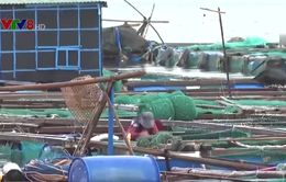Vùng nuôi thủy sản Vạn Ninh phải di dời vào năm 2025