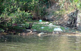 Lâm Đồng: Nguy cơ lây lan dịch bệnh do vứt lợn chết ra suối