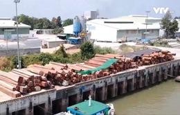 Số phận khó định của 900m3 gỗ lim tại An Giang