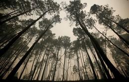 Pháp nỗ lực ngăn chặn loài nấm có khả năng tàn phá rừng
