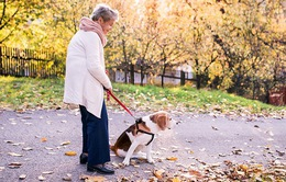 Dắt chó đi bộ có thể tăng nguy cơ chấn thương cho người cao tuổi