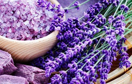 Các loại cây và hoa tốt cho sức khỏe giấc ngủ