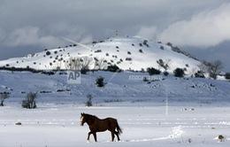 LHQ, EU nhấn mạnh lập trường về cao nguyên Golan