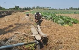 Nông dân khoan giếng, xây hồ dự trữ nước cứu cây trồng