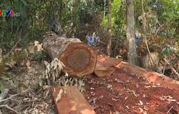 Phát hiện vụ phá rừng quy mô lớn ở Đăk Lăk