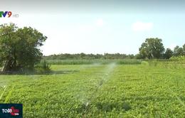 Thích ứng hạn mặn, nông dân mạnh dạn thay đổi mô hình canh tác