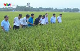 Sơ kết sản xuất cây trồng vụ Đông Xuân các tỉnh duyên hải Nam Trung Bộ và Tây Nguyên