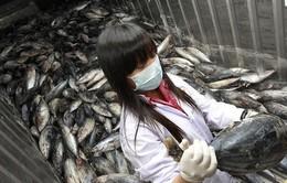 Phán quyết của WTO về lệnh cấm hải sản Nhật Bản