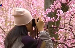 Mùa hoa - Mùa du lịch ở Trung Quốc