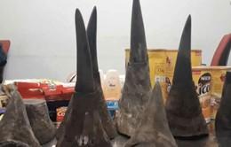 Bắt giữ gần 15kg sừng tê giác tại sân bay Nội Bài