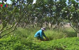 Nông dân nói không với thuốc diệt cỏ