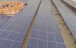 Người dân Triều Tiên dùng điện mặt trời để chống thiếu điện