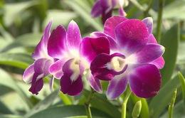 Khám phá không gian của sắc tím hoa lan