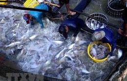 Bứt phá ngoạn mục trong hành trình 60 năm ngành Thủy sản