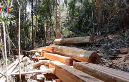 Quảng Nam lại phát hiện vụ tàn phá rừng quy mô lớn