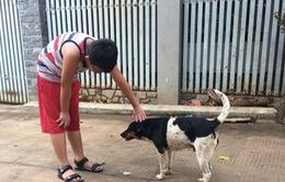 Đắk Lắk: Số người tiêm vaccine phòng bệnh dại tăng cao