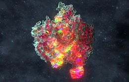 Thử nghiệm chỉnh sửa gene để điều trị bệnh ung thư
