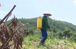 Thuốc diệt cỏ chứa Glyphosate vẫn phổ biến ở Việt Nam