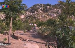 Trồng rừng trên đá