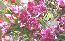Triển lãm làm vườn quốc tế: Chiêm ngưỡng những loại hoa độc đáo