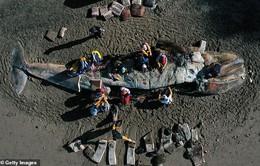 Xác cá voi liên tục trôi dạt vào bờ biển San Francisco vì... chết đói