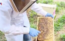 Mục sở thị quá trình nuôi ong lấy mật