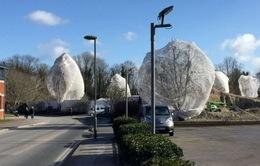 Nước Anh tìm cách ngăn chặn chim làm tổ tại các thành phố