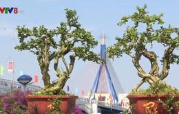 Độc đáo không gian trưng bày sinh vật cảnh mùa du lịch TP Đà Nẵng 2019