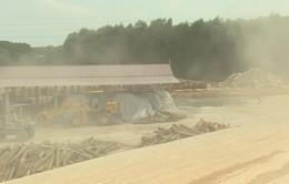 Xây dựng trái phép, nhà máy dăm gỗ vẫn hoạt động lén lút ở Quảng Trị