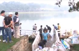 Thả hơn 600kg cá diệt tảo lam tại hồ Xuân Hương