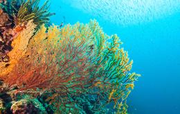 Rạn san hô lớn nhất thế giới bị ảnh hưởng nặng nề bởi biến đổi khí hậu