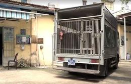 TP.HCM: Đội bắt chó không còn đi bắt chó thả rông