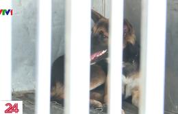 Hơn 10 công văn đề nghị bắt chó thả rông từ đầu năm đến nay