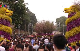 Hoa anh đào: Sứ giả của tình hữu nghị Việt Nam - Nhật Bản