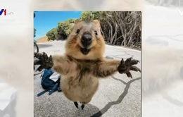 Tới thăm quê hương của loài động vật hạnh phúc nhất hành tinh