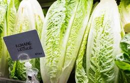 Mỹ: Bùng phát dịch E.coli khiến 72 người mắc bệnh