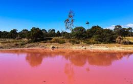 Bí ẩn hồ nước ở Australia bỗng biến thành màu hồng