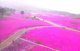 Choáng ngợp thảm hoa ở phía Đông Trung Quốc