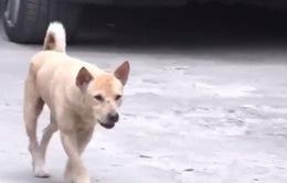 Đắk Nông: Ba cháu bé bị chó dại cắn khi chơi ở sân nhà