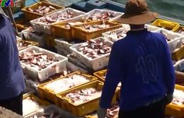 Ngư dân Quảng Ngãi trúng đậm hải sản